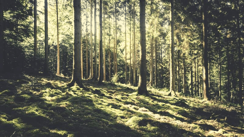 silent and quiet sunlight in a forest